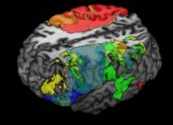big_348089_science_brain and intellect_usa